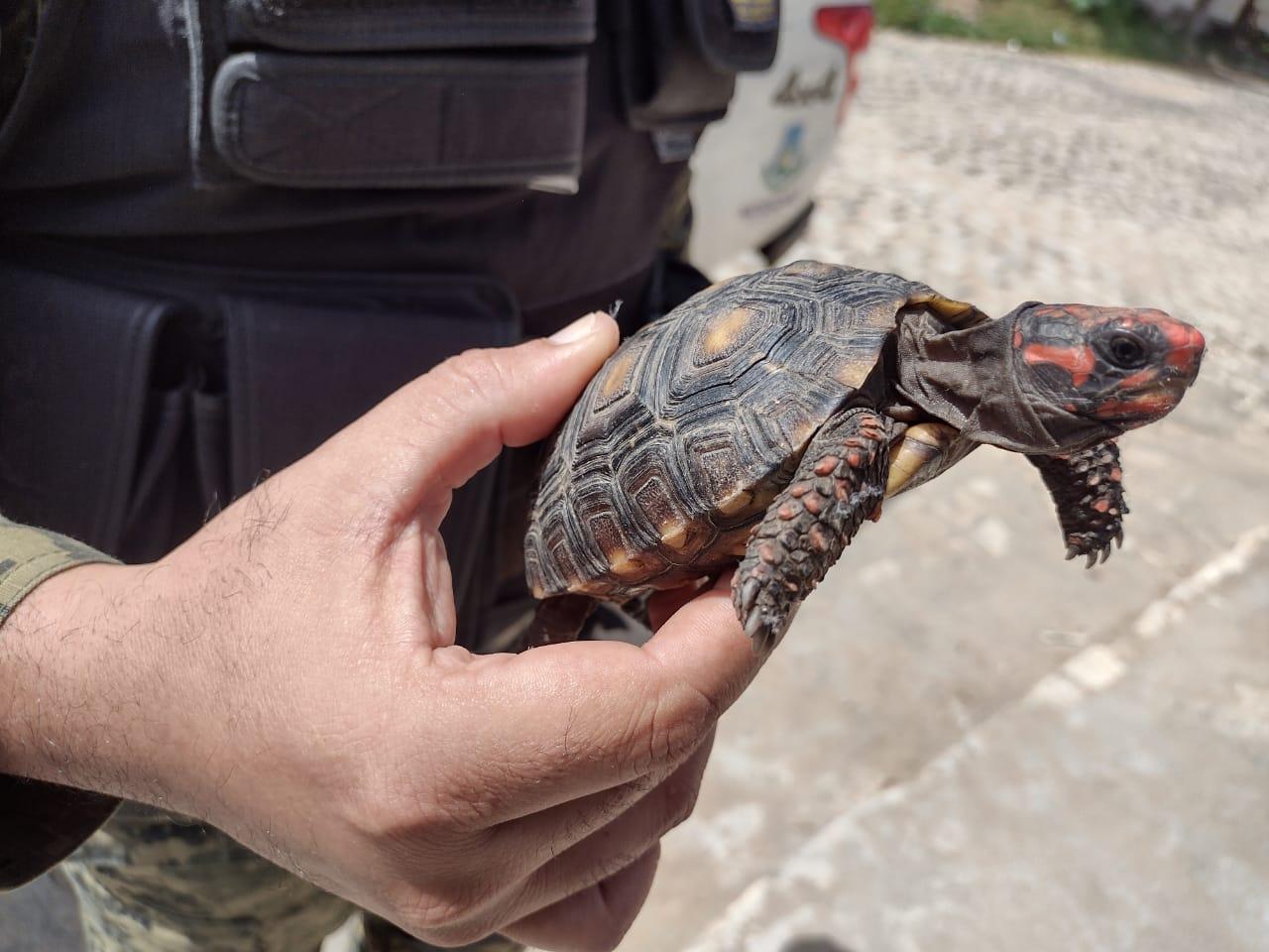 Mais de 100 animais são resgatados pela Guarda Municipal em 2021