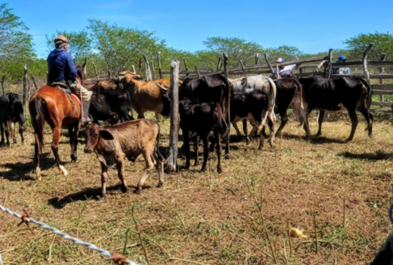 Comunidades Rincão e Alto da Pelonha recebem equipes de vacinação da Febre Aftosa