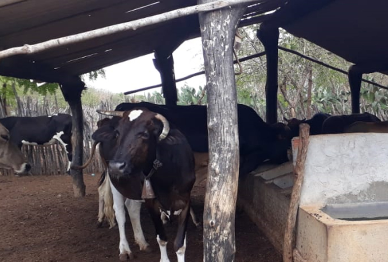 Secretaria orienta bovinocultores a regularizar rebanho para garantir vacina contra febre aftosa