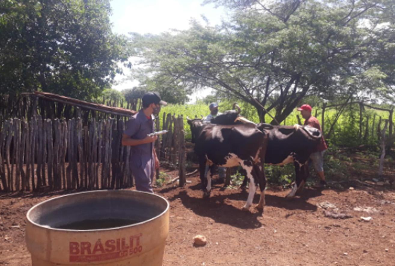Primeiro dia de campanha da febre aftosa em Mossoró vacina 300 animais
