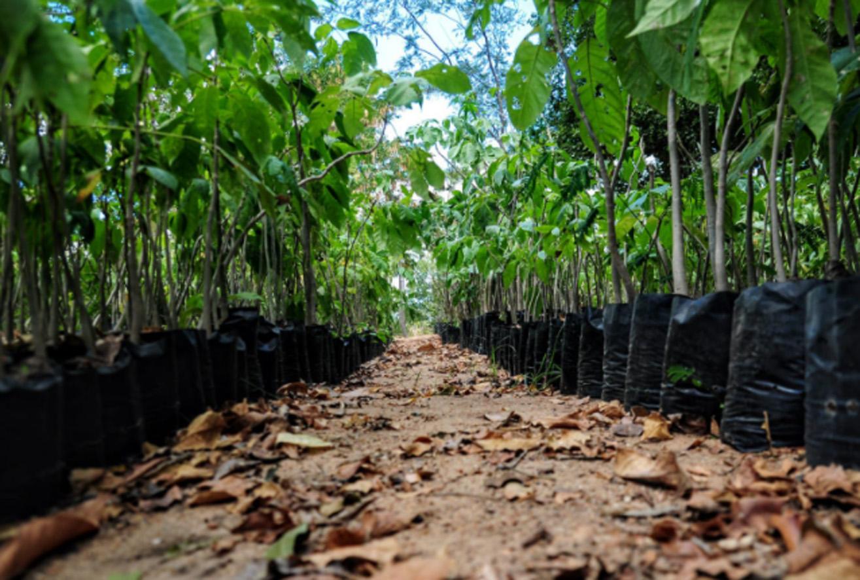 SEADRU passa a ser responsável pela produção de mudas no horto florestal