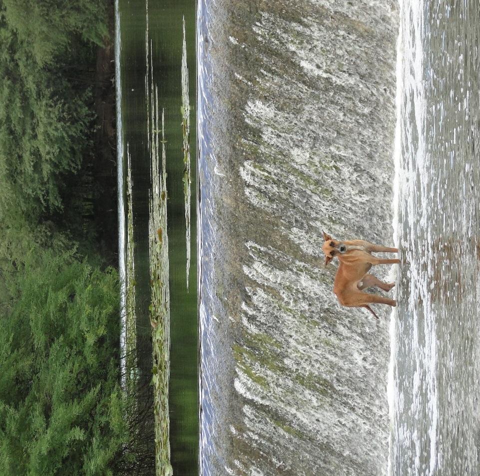 Cão abandonado no Rio Mossoró